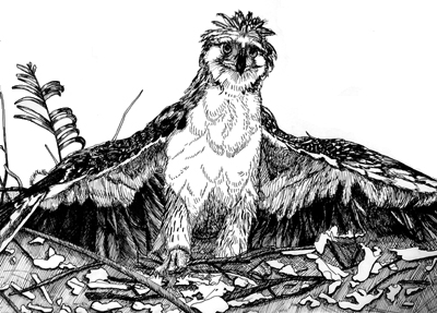 Monkey Eaglet | Illustration | Christel's Design Studio